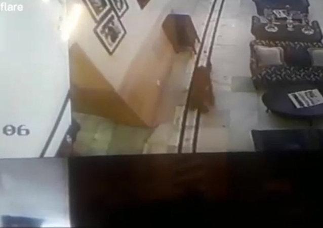 印度一頭野豹進入酒店大廳