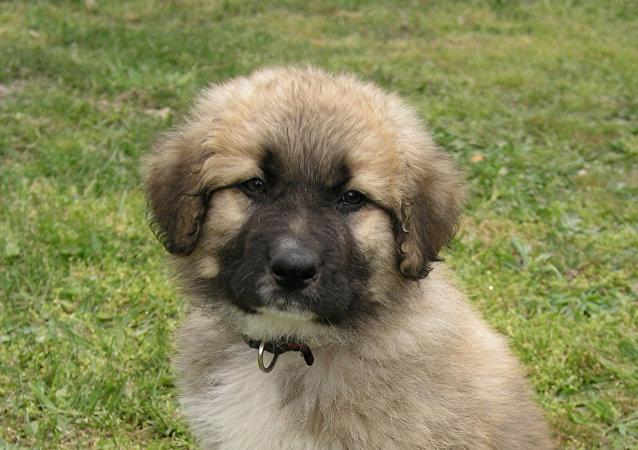 塞爾維亞總統將贈送普京一條狗
