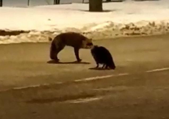 貓和狐狸無法在俄波邊境分享香腸