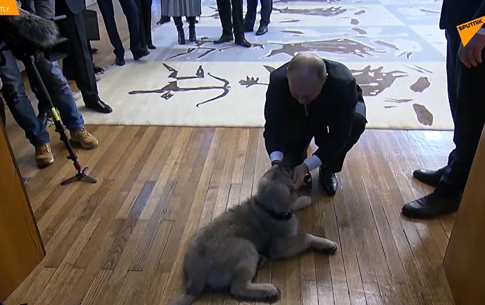 塞尔维亚总统赠送普京宠物狗