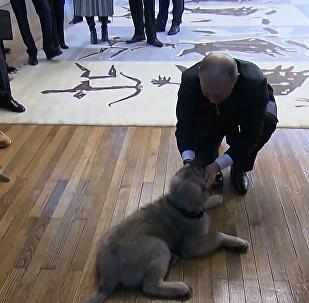 塞爾維亞總統贈送普京寵物狗