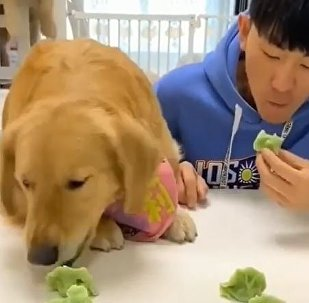 Man vs. Nature: Golden Retriever Competes With Owner in Eating Contest