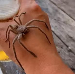 我的新朋友……蜘蛛!