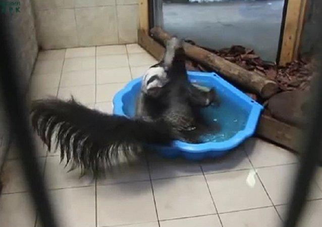 食蟻獸怎麼洗澡?