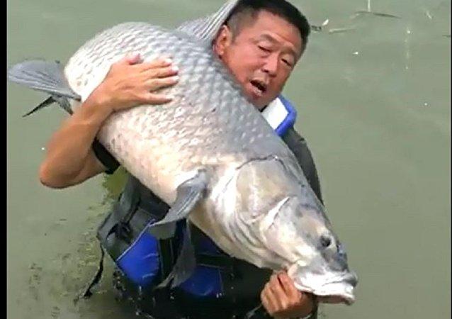 中國一名漁民抓到一條75公斤大鯉魚
