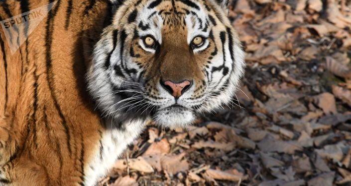 联合国:百万种动植物面临灭绝威胁
