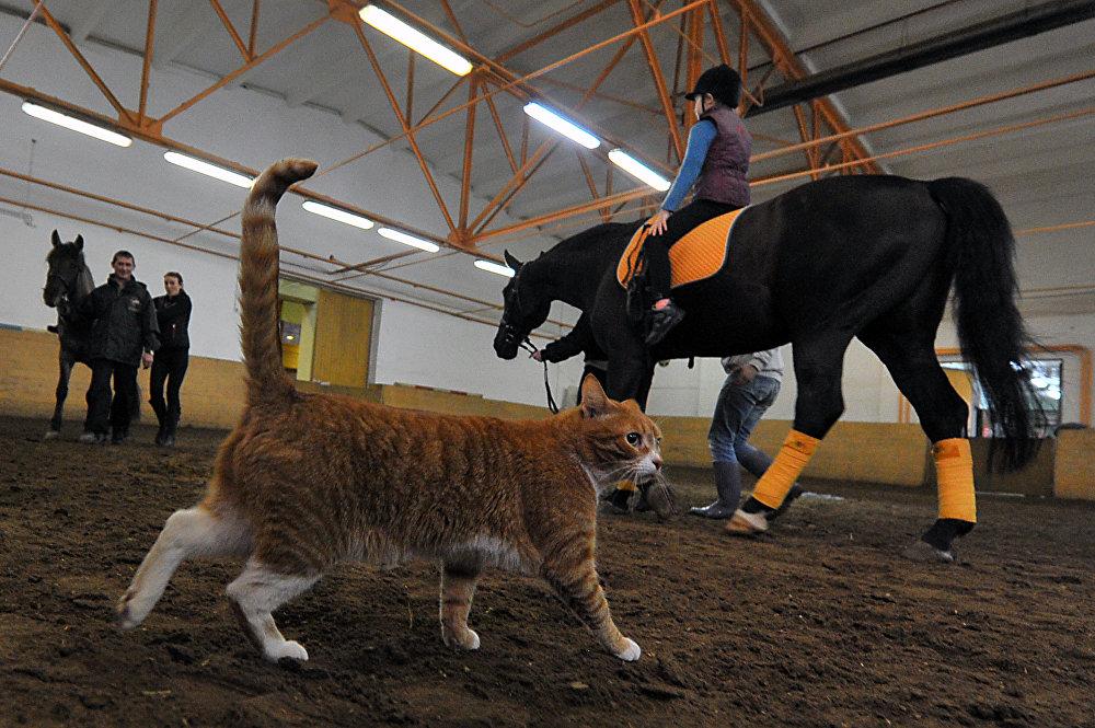 在俄罗斯体验骑马的乐趣