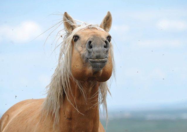騎士氣質的培養來源於馬術運動