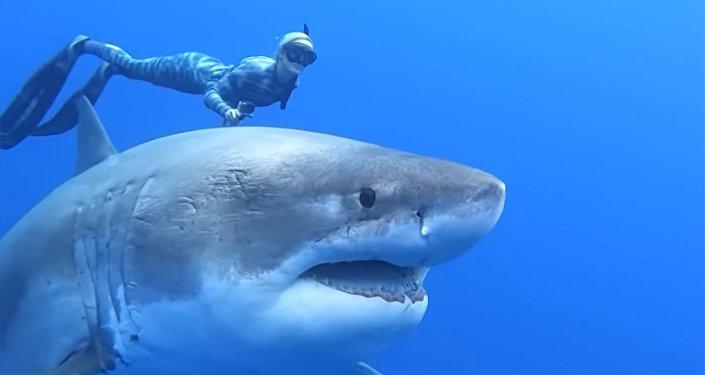 观察史上最大一条大白鲨被视频拍下