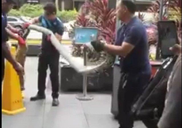 在新加坡的中心购物街上发现了一条三米长的蟒蛇