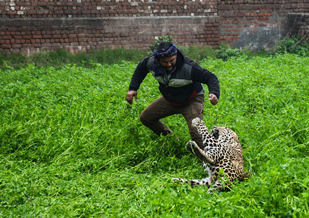 憤怒的豹子襲擊眾人