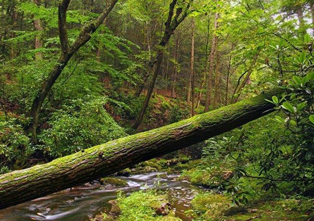 野生森林中一段樹木刷爆網絡