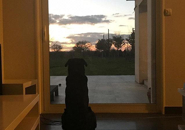 足球运动员萨拉的姐姐发布他的宠物狗等主人的感人照片