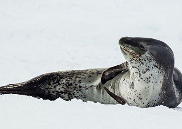 在新西兰的海豚身上发现了一个带不明身份游客照片的U盘