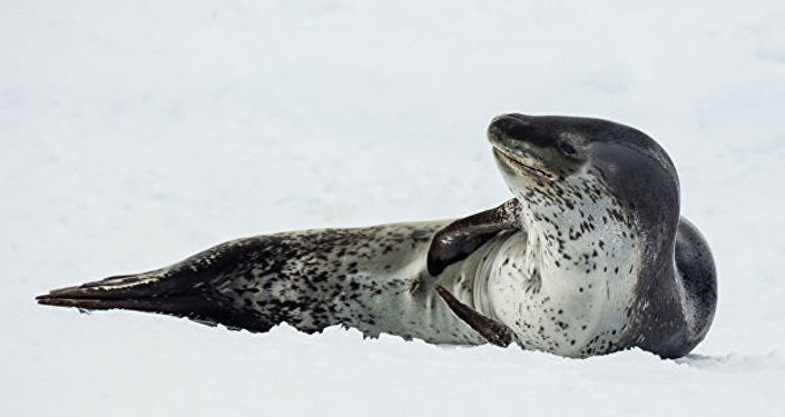 在新西蘭的海豚身上發現了一個帶不明身份遊客照片的U盤