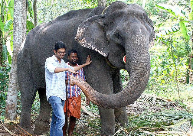 报纸称世界最老的亚洲象在印度去世终年88岁