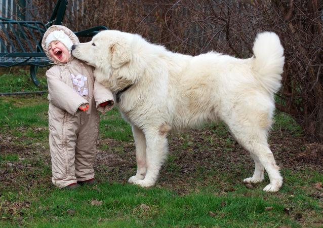 專家:孩子7歲前不宜養狗
