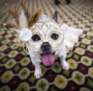 狗狗秀:纽约宠物时装秀