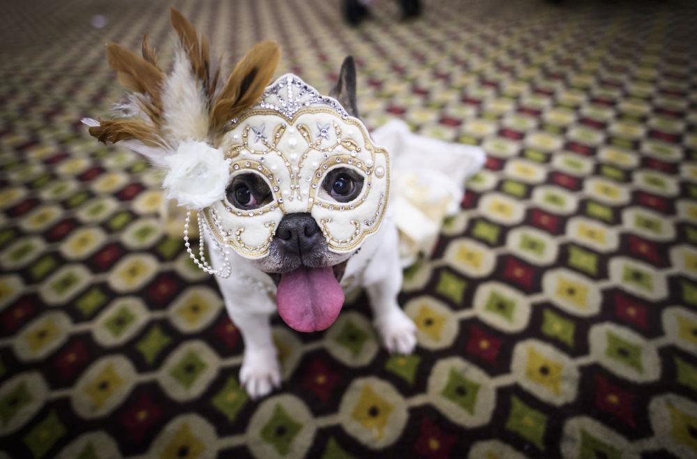 狗狗秀:紐約寵物時裝秀
