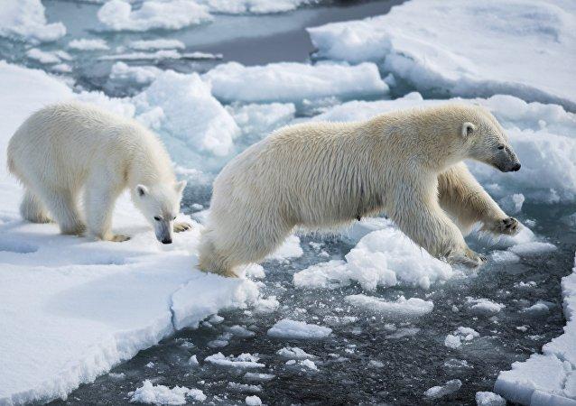 俄中海洋院校將在漁業與北極開發等領域開展交流合作