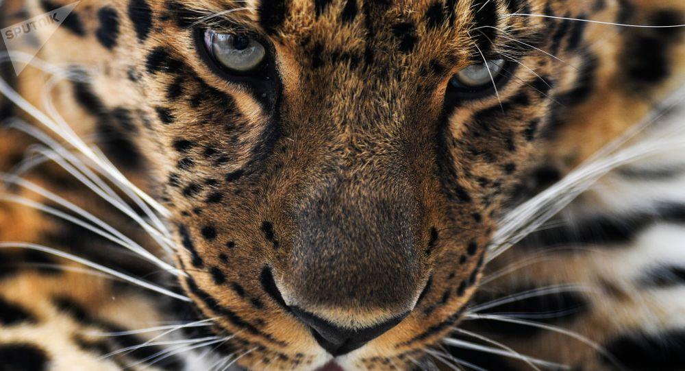 云南一小男孩捡到两只小豹猫带回家