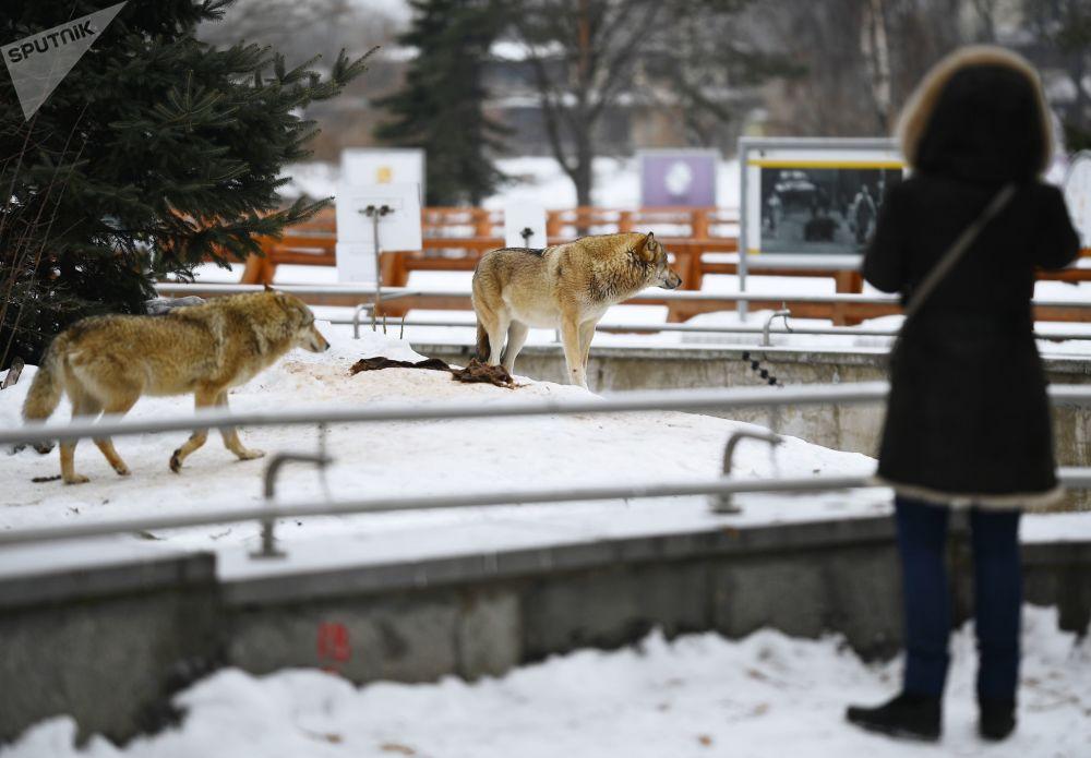 莫斯科動物園155週年