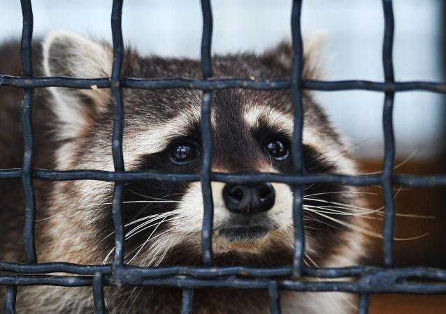 俄羅斯將制定動物園動物飼養新標準