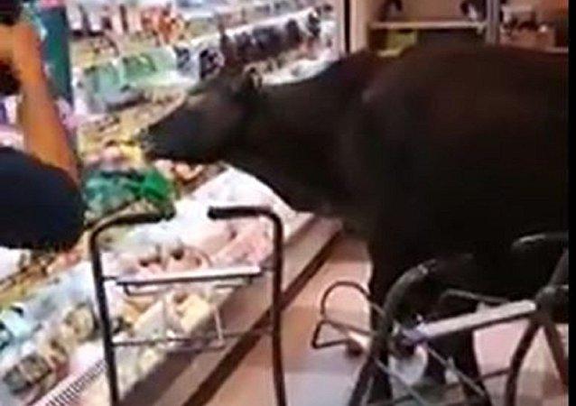 香港牛已進化到會去超市吃大餐