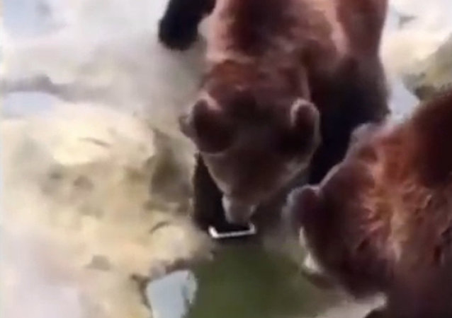 動物園遊客將蘋果手機錯當水果扔進熊捨