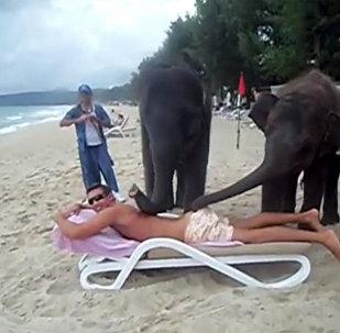 在泰國度假勝地的小象按摩