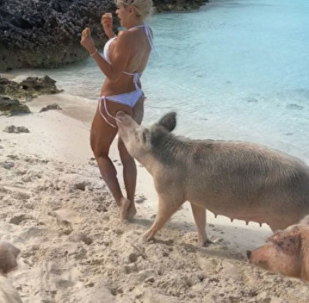 豬年到豬放飛自我「親」模特的美臀