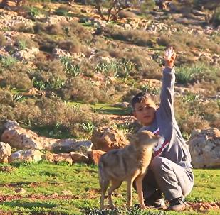 利比亚小男孩与狼为友