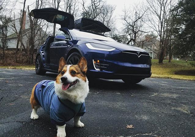 特斯拉电动车推出狗狗模式