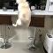 跳高记录!