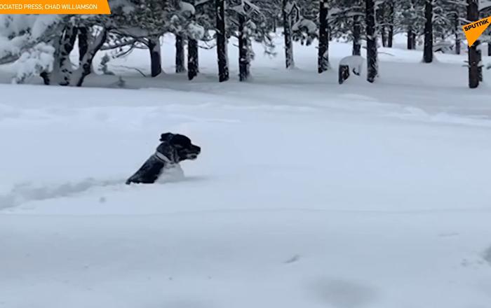 美国南部亚利桑那州弗拉格斯塔夫市遭遇104年来最强降雪。