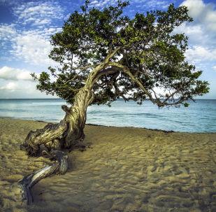 阿鲁巴老鹰海滩