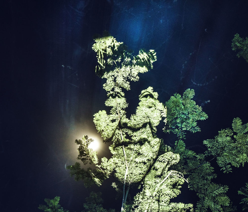 樹上的肖像
