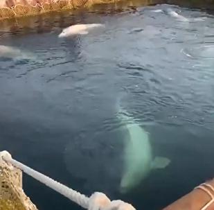 """""""鲸鱼监狱""""中动物生活条件得到改善"""