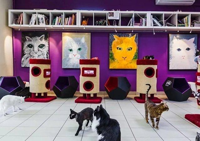 """莫斯科的各种""""猫""""主题咖啡馆"""