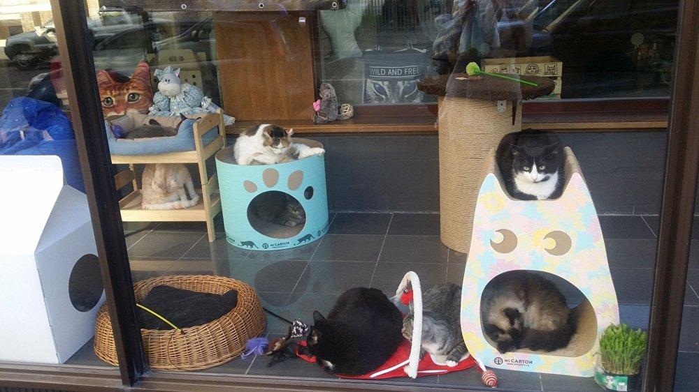 """莫斯科的各种""""猫""""主题咖啡厅"""