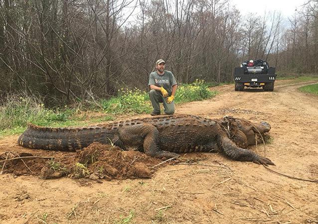 美国发现一只特大鳄鱼