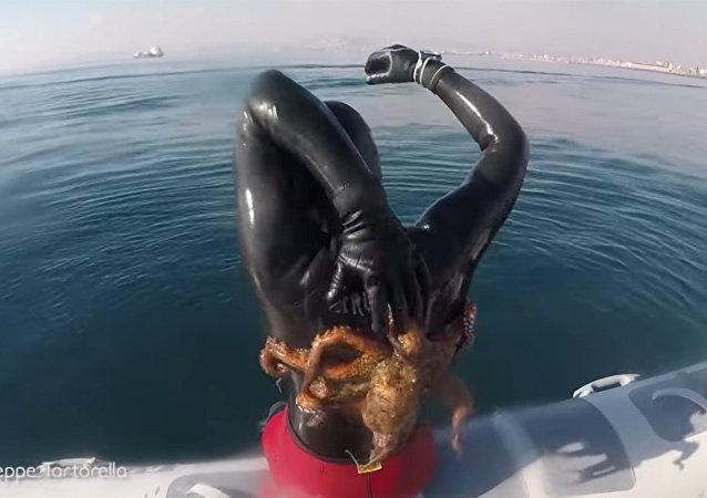 意大利潜水员与章鱼长时间搏击