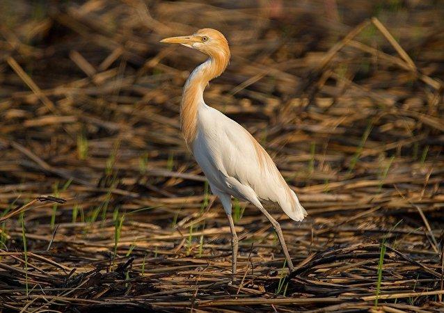 一张隐着神秘小鸟的照片让印度网民迷惑不解