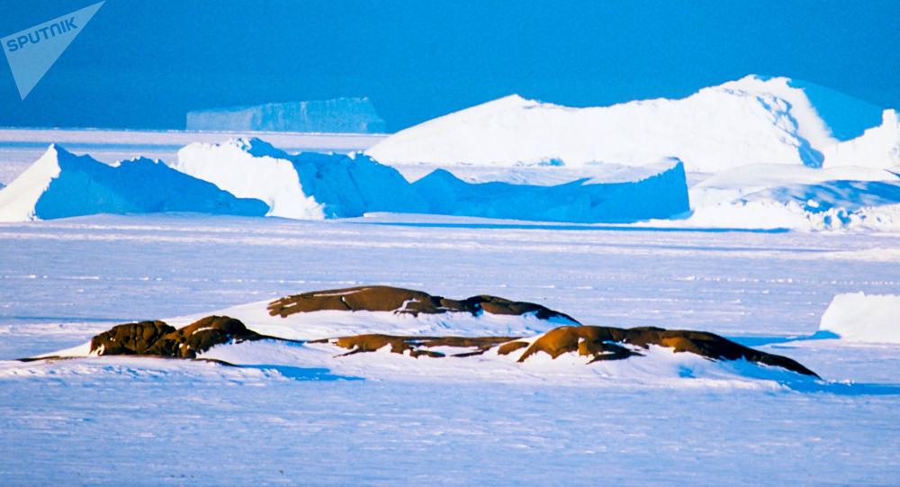 专家:南极气温零上天数或增加一倍达130天