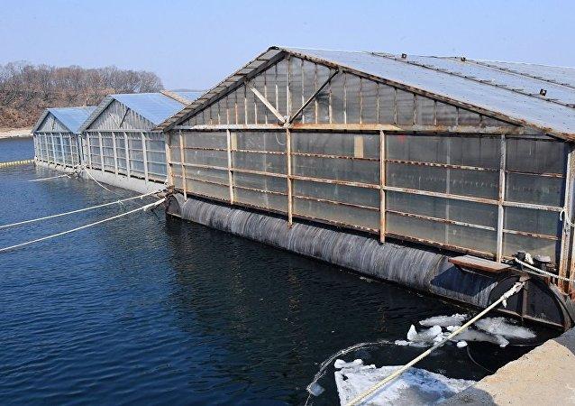 俄滨海边疆区一个海湾将建立虎鲸收容中心