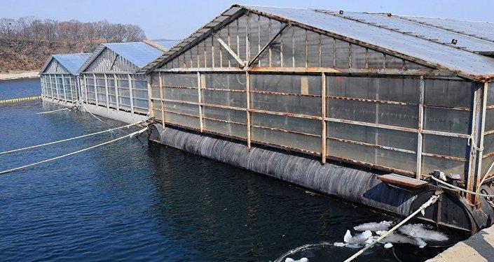俄滨海边疆区,鲸鱼监狱