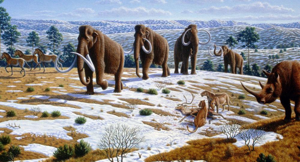 俄日科學家正努力試圖復活猛獁象