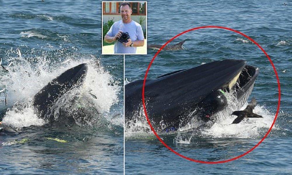 鯨魚先是生吞後又吐出一名活生生的潛水員