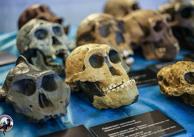 学者:远古人的牙齿类似高尔夫球