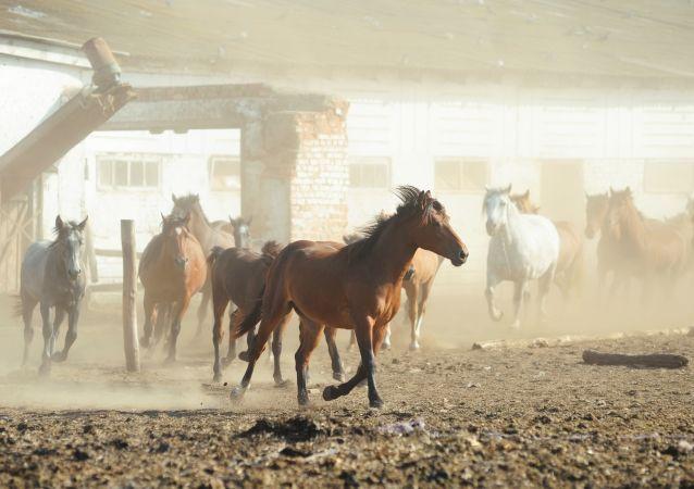 Лошади в загоне